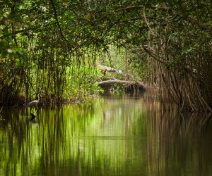 ป่าแอมะซอนมีสิทธิเท่าบุคคล