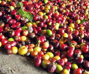 แหล่งผลิตกาแฟภูมิทัศน์วัฒนธรรมแห่งโคลอมเบีย