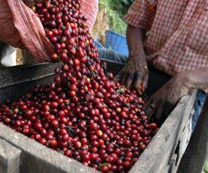 เรื่องน่ารู้เกี่ยวกับกาแฟของโคลอมเบีย