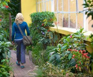 สวนพฤกษศาสตร์โบโกตาประเทศโคลอมเบีย